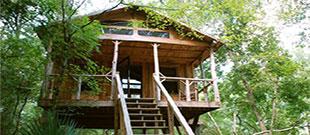 Edisto River Treehouses